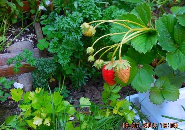 Herbs Redo1.jpg