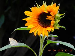 SF&Butterfly10.JPG